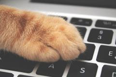 cat-3695040_960_720